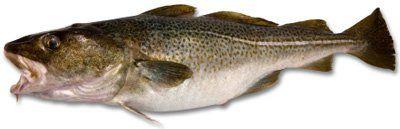 omega balık yağı