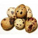 Bıldırcın Yumurtasının Faydaları Nelerdir?