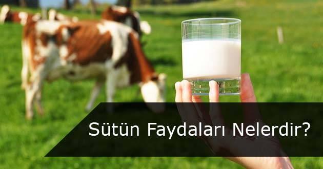Sütün Sağlığa Faydaları