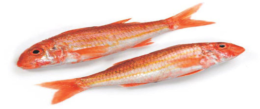 İstiridye Balığı