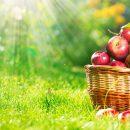 Elmanın İçerdiği Vitaminler